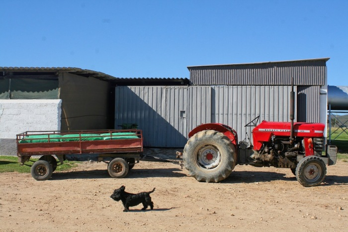 A red tractor on the farm.