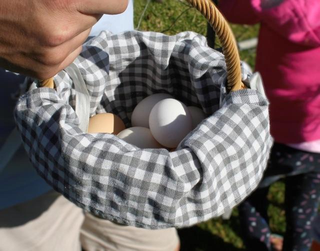 Fresh free range farm eggs in a basket.