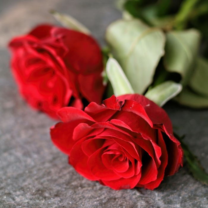 Red roses for Valentines Day.